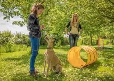 Kindercoachen-met-honden-en-paarden-workshop-1024x950